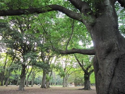 s-野点@代々木公園1